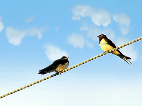 Birds on a Wire  笹 stock videos & royalty-free footage