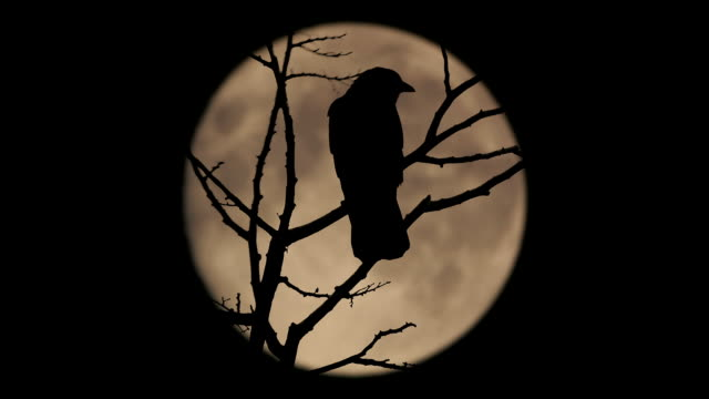 Birds On Branch With Large Moon Behind video