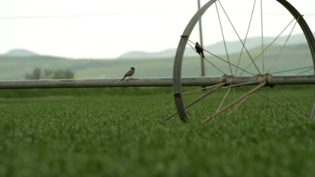 Birds on Farm Equipment video
