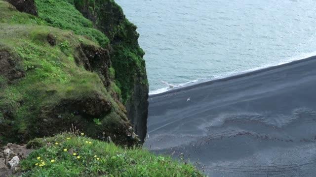 vídeos y material grabado en eventos de stock de aves en la península de dyrholaey en islandia - basalto