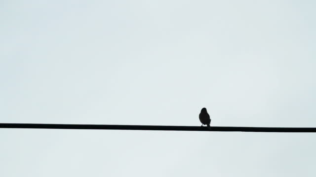 Birds on the electric wire after raining with blue sky background video