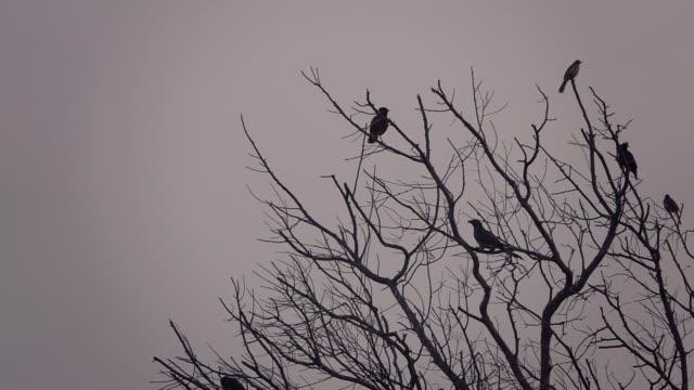 fåglar på trädet - abstract silhouette art bildbanksvideor och videomaterial från bakom kulisserna