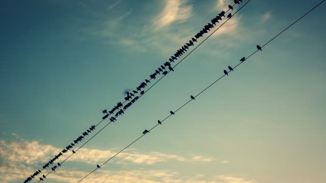 birds on the wires at sunset - filo metallico video stock e b–roll