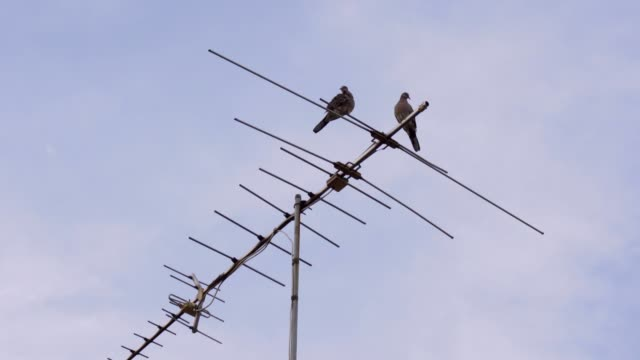 birds on tv antenna with blue sky - antenna parte del corpo animale video stock e b–roll