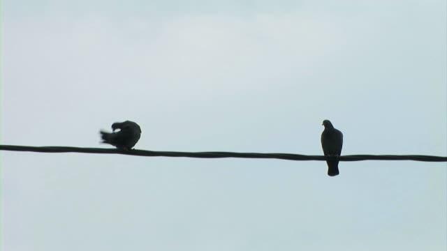 鳥のワイヤ - 2匹点の映像素材/bロール