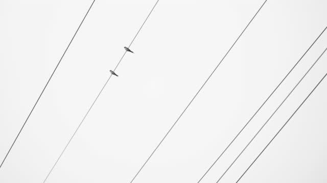 uccelli sui fili - appollaiarsi video stock e b–roll