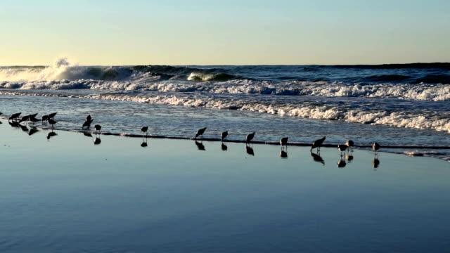 Birds running in surf.