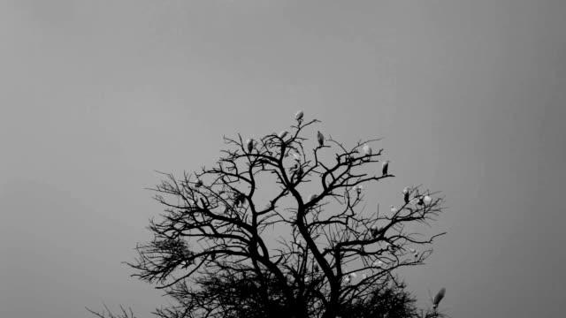 Birds sitting on a tree video
