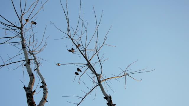 Birds Sitting on Bare Tree