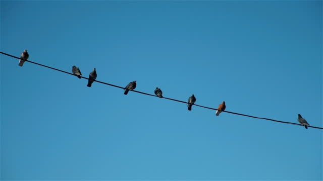 birds sitting on high-voltage wires - appollaiarsi video stock e b–roll