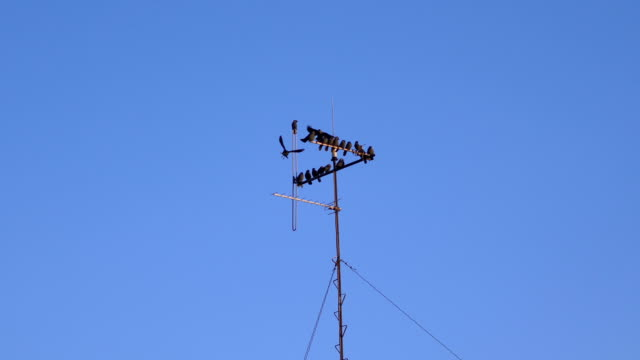 Birds sitting on the antenna in 4k slow motion 60fps