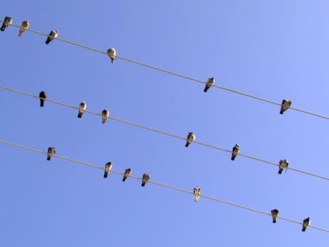 ptaki stać na kabel - zachowanie zwierzęcia filmów i materiałów b-roll