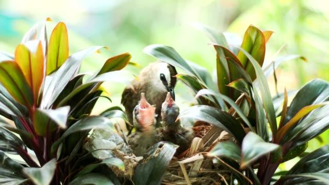 鳥は、フィードのフラッパーに獲物を取る。 - 動物の身体各部点の映像素材/bロール