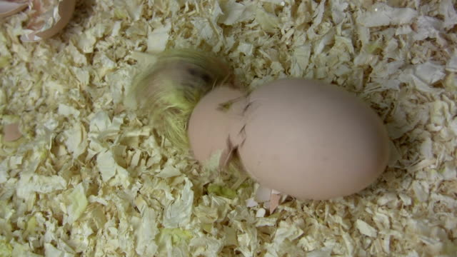 Birthing video