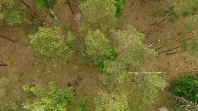 bisons aus luft - weißrussland stock-videos und b-roll-filmmaterial
