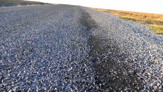Bituminous Asphalt Road Stock Video - Download Video Clip