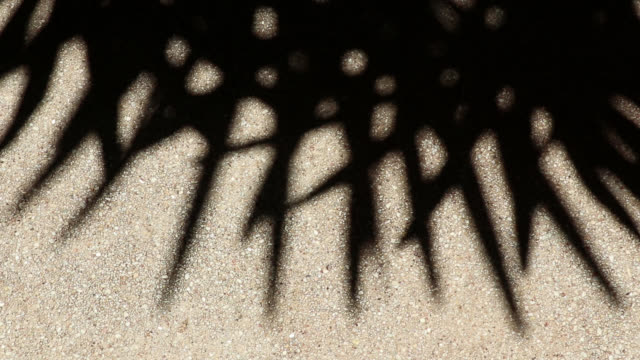Bizarre shadow of bamboo palm tree leaves on gravel floor or wall