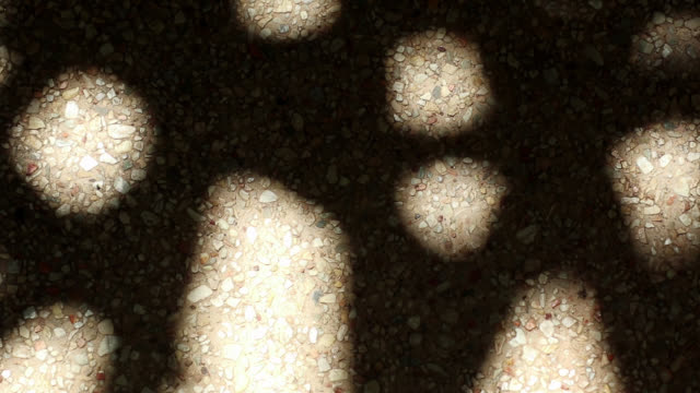Bizarre shadow of bamboo palm tree leaves on gravel floor