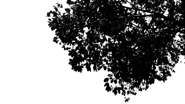 Black and white Branches in wind isolated on white background video
