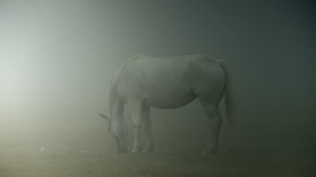 bianco e nero di cavalli - animale selvatico video stock e b–roll