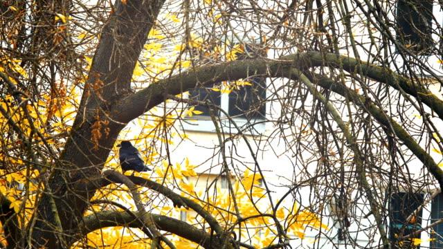 A black bird sitting in leaves. Autumnal Oak Leaves Late summer early autumn sunlight through oak leaves