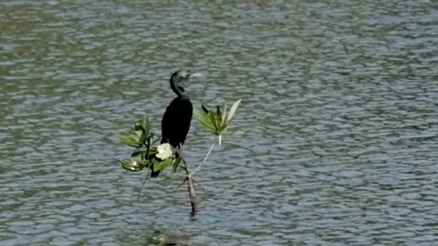 Black Bird Sitting on Branch video