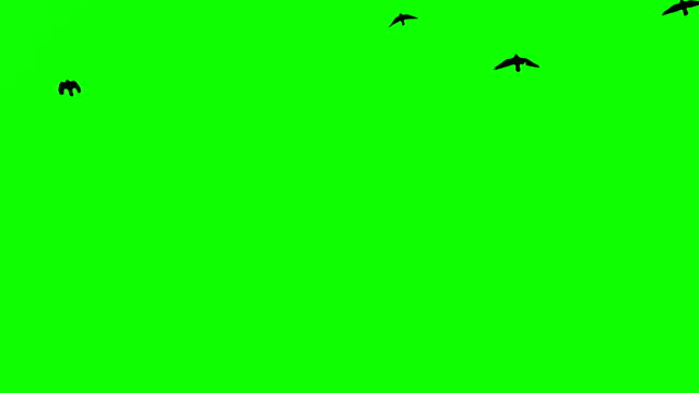 Black birds fly up at top on green screen background video