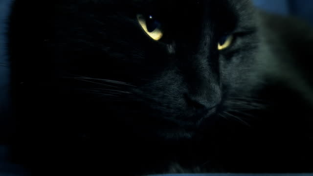 HD: Black Cat Awakening video