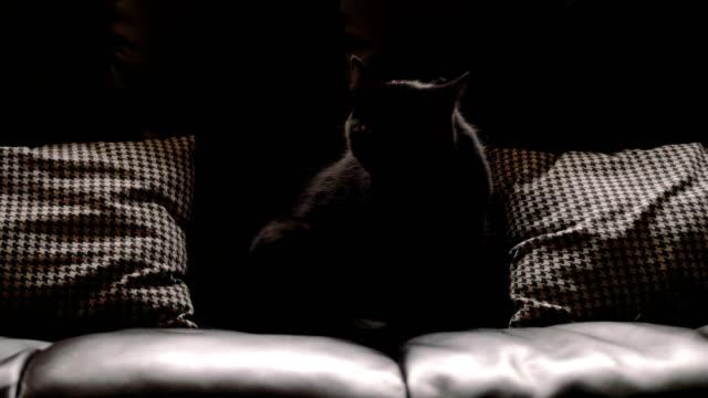 Black cat grooming itself. 4K footage. Black cat grooming itself while seated on a black leather couch. high dynamic range imaging stock videos & royalty-free footage