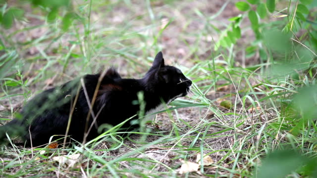 Black cat jumping in the grass, slow motion video