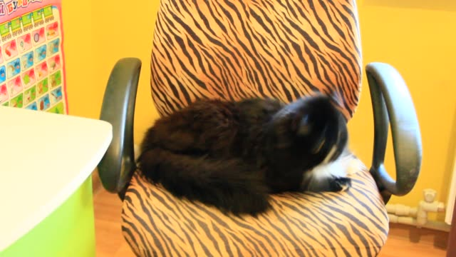 black cat siting on arm-chair and is very frightened of loud sound of perforator - сбежавший из дома стоковые видео и кадры b-roll