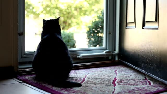 vídeos de stock, filmes e b-roll de gato preto sentado perto da porta, abanando a cauda - felino