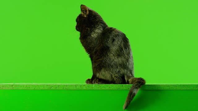 Black Cat sitting on green screen. Shot on RED EPIC DRAGON Cinema Camera in Slow Motion. video