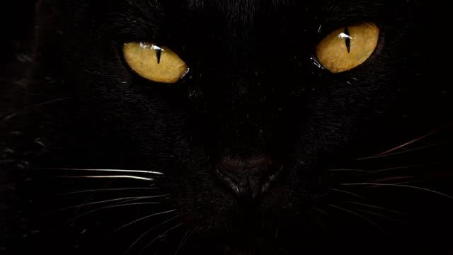 svart katt - päls textil bildbanksvideor och videomaterial från bakom kulisserna