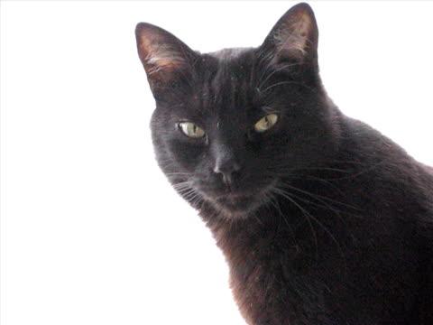 schwarze cat - nutztier oder haustier stock-videos und b-roll-filmmaterial