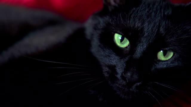 black cat - kattdjur bildbanksvideor och videomaterial från bakom kulisserna