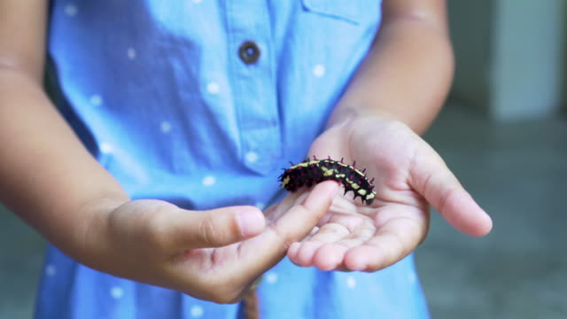 Black caterpillar crawling on girl hand Close up shot. 4K (UHD) footage. Caterpillar crawling on girl hand, she playing and happiness butterfly insect stock videos & royalty-free footage