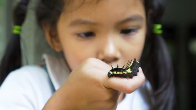 vídeos y material grabado en eventos de stock de oruga negra reptando por parte de la chica - insecto