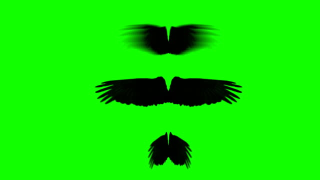 Black Crow Wings Spreading and Waving in Different Rhythm on a Green Screen Black Crow Wings Spreading and Waving in Different Rhythm on a Green Screen animal wing stock videos & royalty-free footage