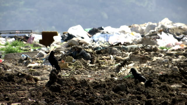 black crows at the garbage dump a few black crows at the garbage dump scavenging stock videos & royalty-free footage