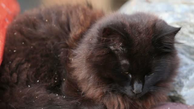 Black Dirty Cat