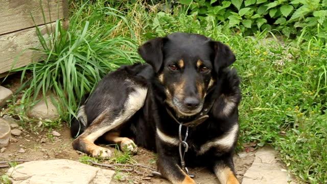 cane nero  - cane addestrato video stock e b–roll