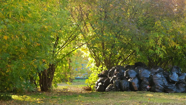 Black garbage bags with trash in autumn park near the trees, seasonal cleaning. video