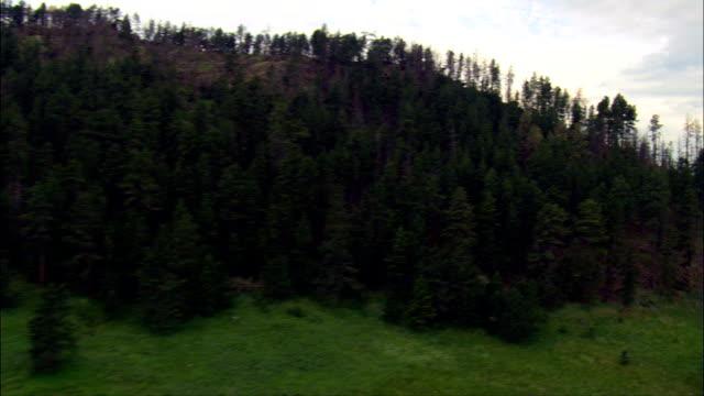 vídeos y material grabado en eventos de stock de black hills cerca del monte rushmore - vista aérea - dakota del sur, condado de pennington, estados unidos - mount rushmore
