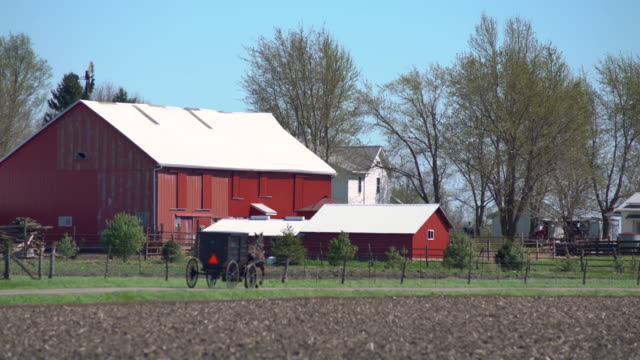 Black Horse Drawn Buggy Speeds Along Farm Road in Amish Country Arthur Illinois