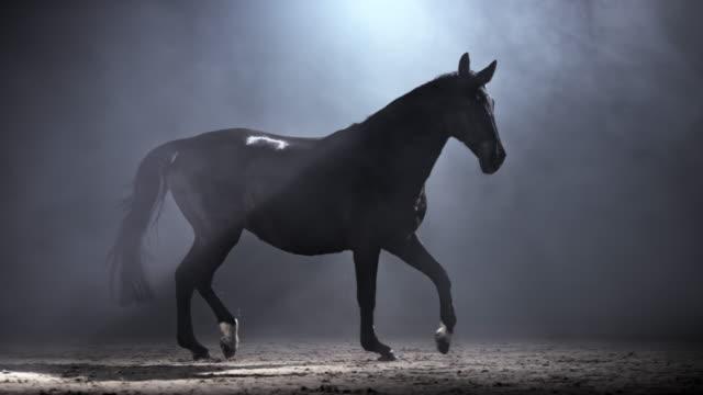 slo mo ds svart häst som springer i en ridhall på natten - racehorse track bildbanksvideor och videomaterial från bakom kulisserna