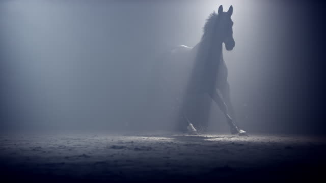 SLO MO DS Black horse running in mist at night