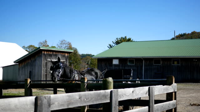 a black horse tied up to a wooden fence near an amish farm - briglia video stock e b–roll
