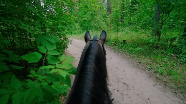 Black horse walking in the summer forest Black horse walking in the summer forest, slow motion animal markings stock videos & royalty-free footage