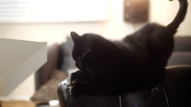 black house cat damaging a new leather chair. - ноготь на руке стоковые видео и кадры b-roll